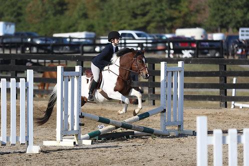 """9. Beginner Hunter Horse over 18"""" Cross Rails"""