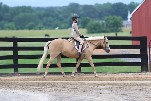2. Walk Trot Equitation