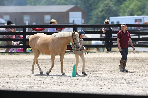 43B. Coached Showmanship