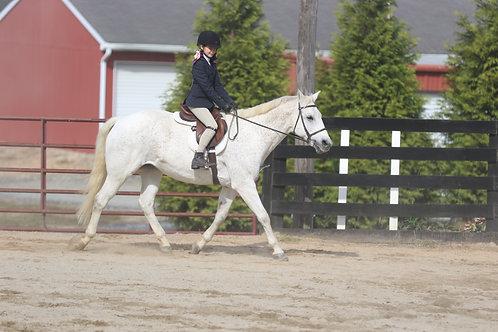 13. Open Hunter Equitation WT