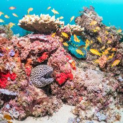 Colorful Coral