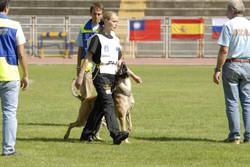 HelgeGebrauchshund