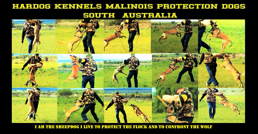 Hardog Kennels Breeding Working Malinois South Australia
