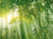 Curso en gestión y evaluación ambiental