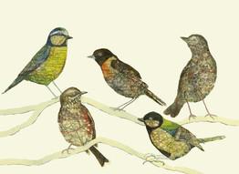Jo's Birds