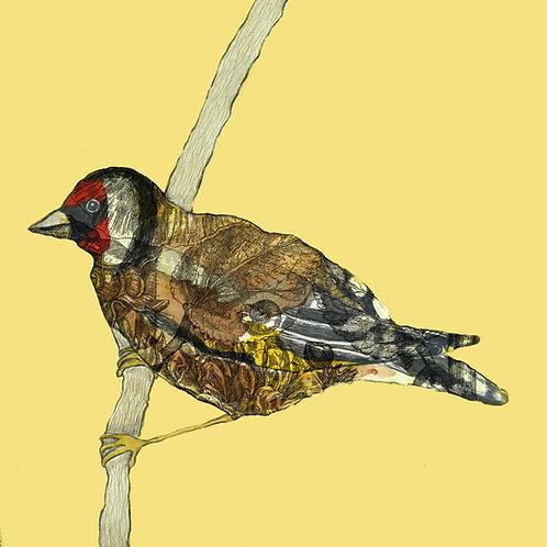 Set of 4 'Garden Birds' Cards (4 designs)