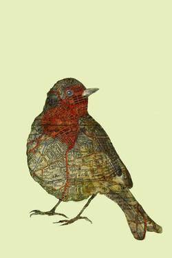 Morningside Robin