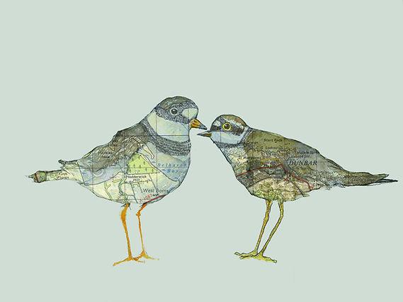 Dunbar Little Plovers