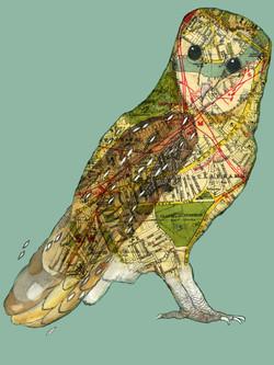 Clapham Barn Owl