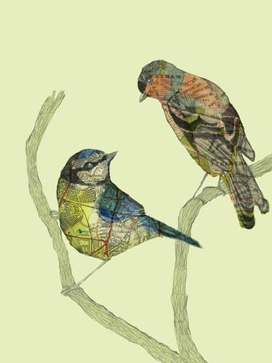 Becca's Mum's Birds