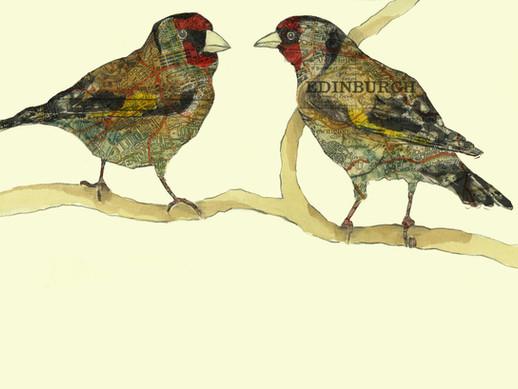 Edinburgh Goldfinches