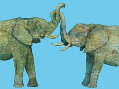 A Couple of Elephants