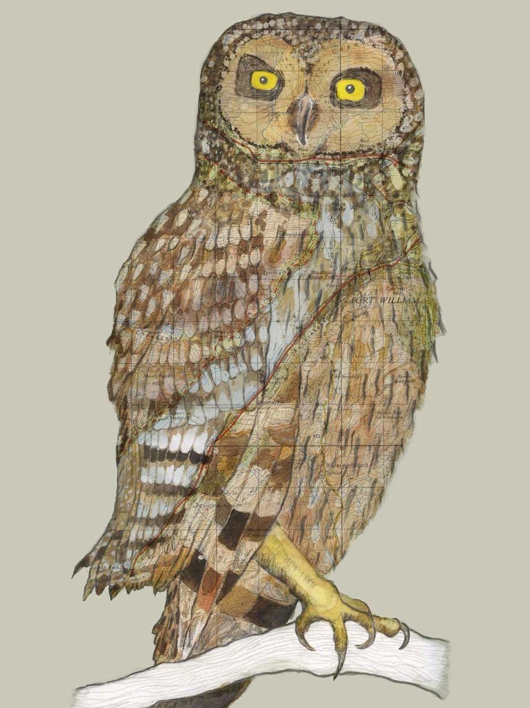 Loch Linnie Owl