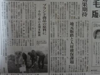 グループ会社ベジモとちぎ(株式会社野のファーム)の取り組みが下野新聞に掲載されました 3月20日