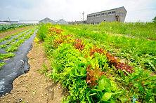 愛知岐阜三重静岡の有機野菜の宅配ベジモあいちベジモあいちの写真