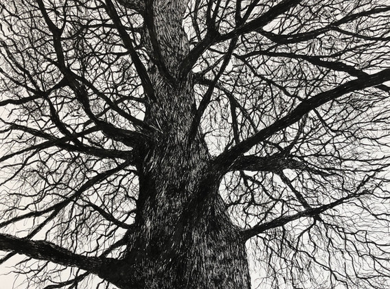 'Canopy 2-Serpentine Gardens, Buxton'