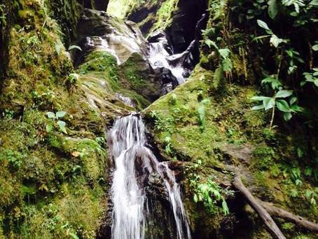Senderismo Reserva Natural Rio Blanco (Manizales)
