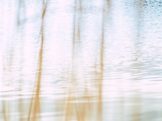 wood-light-nature-art-screens_edited.jpg