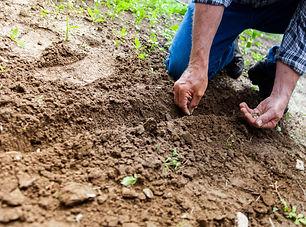 man-planting-plant-169523.jpg