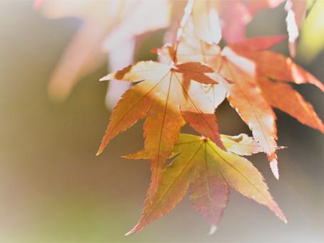 Heißer Herbst!