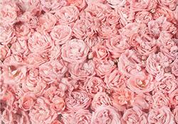 Toile Fleur rose 10X6,5