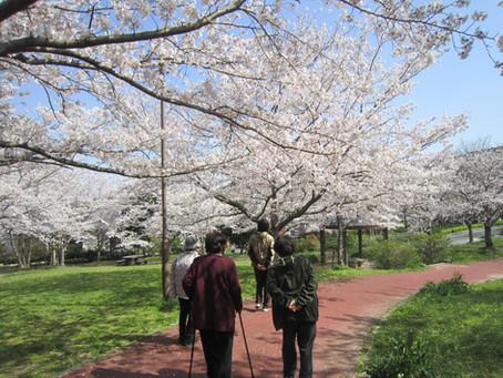 🌸お花見散歩2021🌸