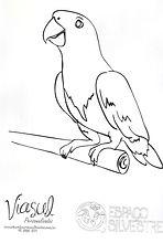 Papagaio-de-peito-roxo para colorir
