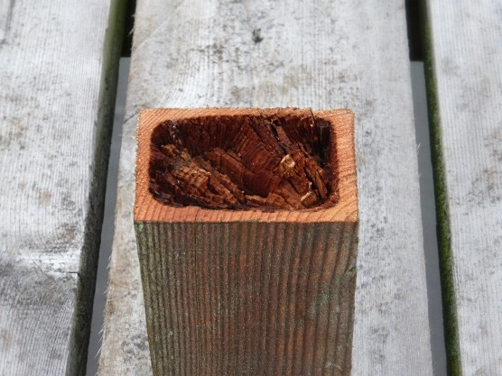 5.Fence Post decay_edited
