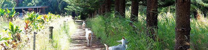 Hilli Goat.jpg