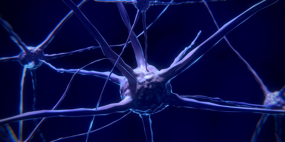 Fortnightly talk: Neuromorphic Nanotechnology
