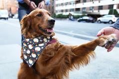 The famous hug dog Louboutina - the best girl!