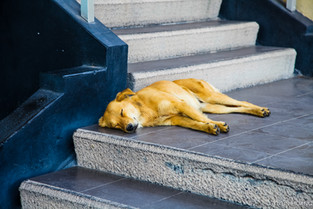 Peaceful stray dog at Teotihuacan in Mexico
