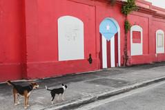 Street dogs of Punta Santiago