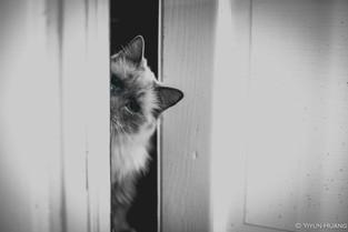 Boo peeking out