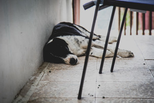 My favorite street dog Moose lounging in our front porch in Punta