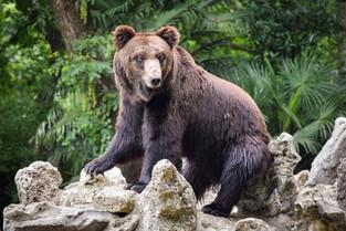 A suspicious bear at Shanghai Zoo