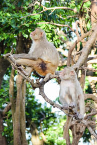 Two very in sync monkeys at Cayo