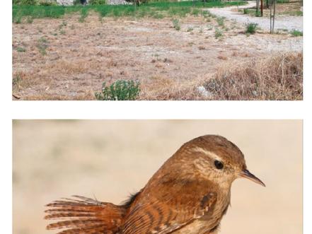 75 espècies detectades al parc dels talls durant el 2020