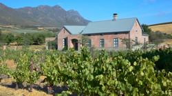 Vineyard Views from the Vineyard_edited