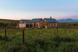 Vineyard Views-224