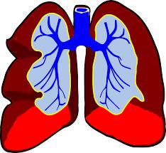 श्वास तंत्र की बीमारियाँ(Diseases of the Respiratory Organs)