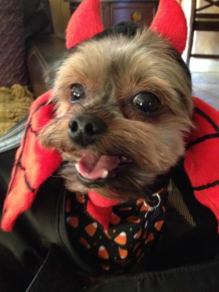 "Leo ""Devil Dog"" at Halloween"