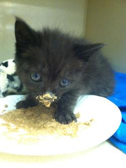 Special needs kitten pet sitting