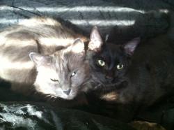 Rudy & Gizmo