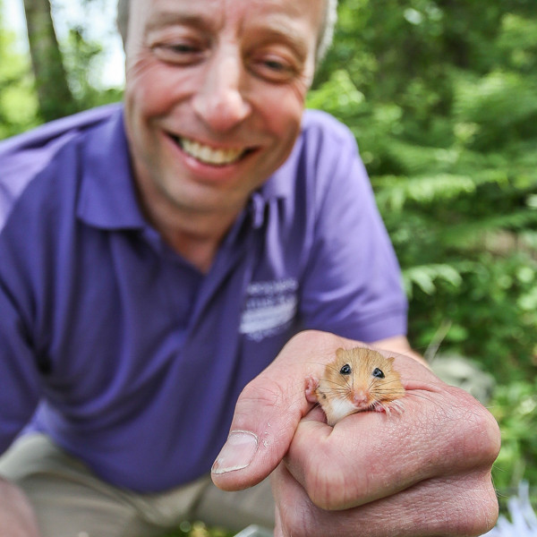 Harvest mice release story