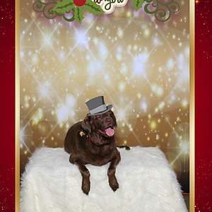 Park Pals Holiday Pet Photo Booth 2019