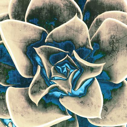 Perle Von Nurnburg Echeveria Succulent