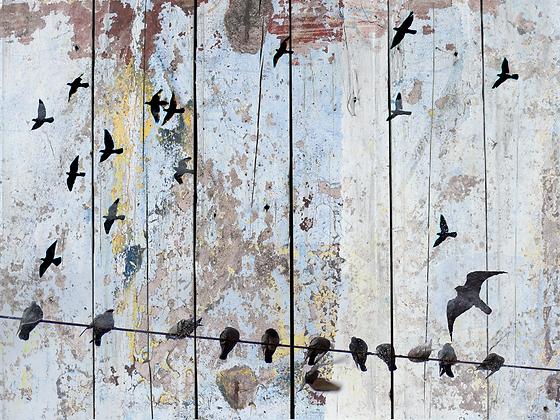 Spring Birds, Hand Embellished Canvas Giclee