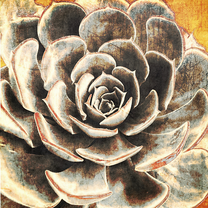 Echeveria, Embellished Canvas Giclee