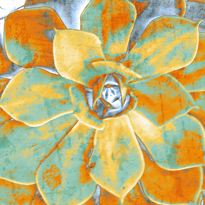 Aeonium Haworthii, Hand  Embellished Canvas Giclee